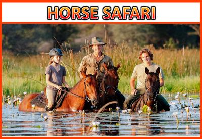 Horse Safari